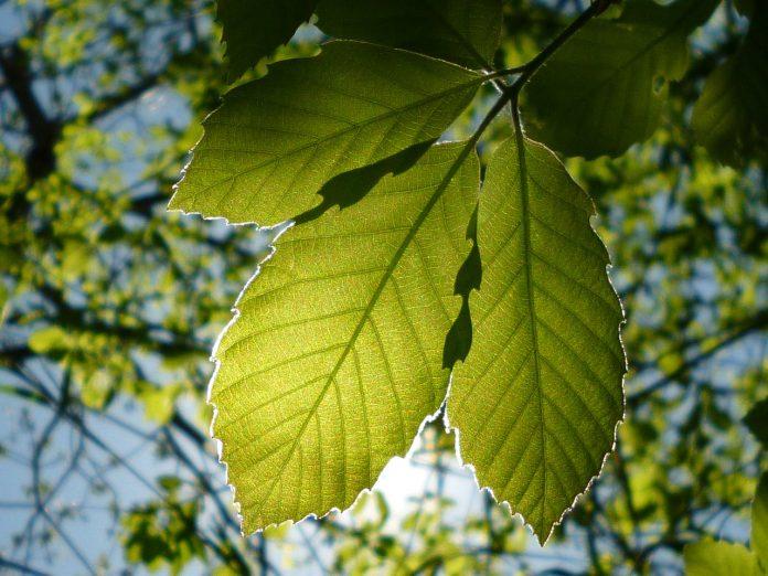 energia_green