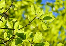 contributo_ambientale