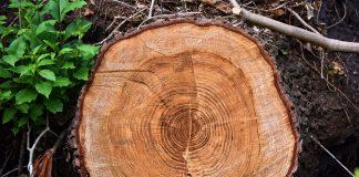 Gestione sostenibile delle foreste