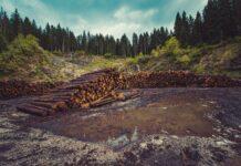 Taglio alberi nella foresta, deforestazione.
