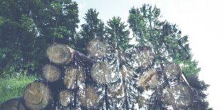 Taglio foresta